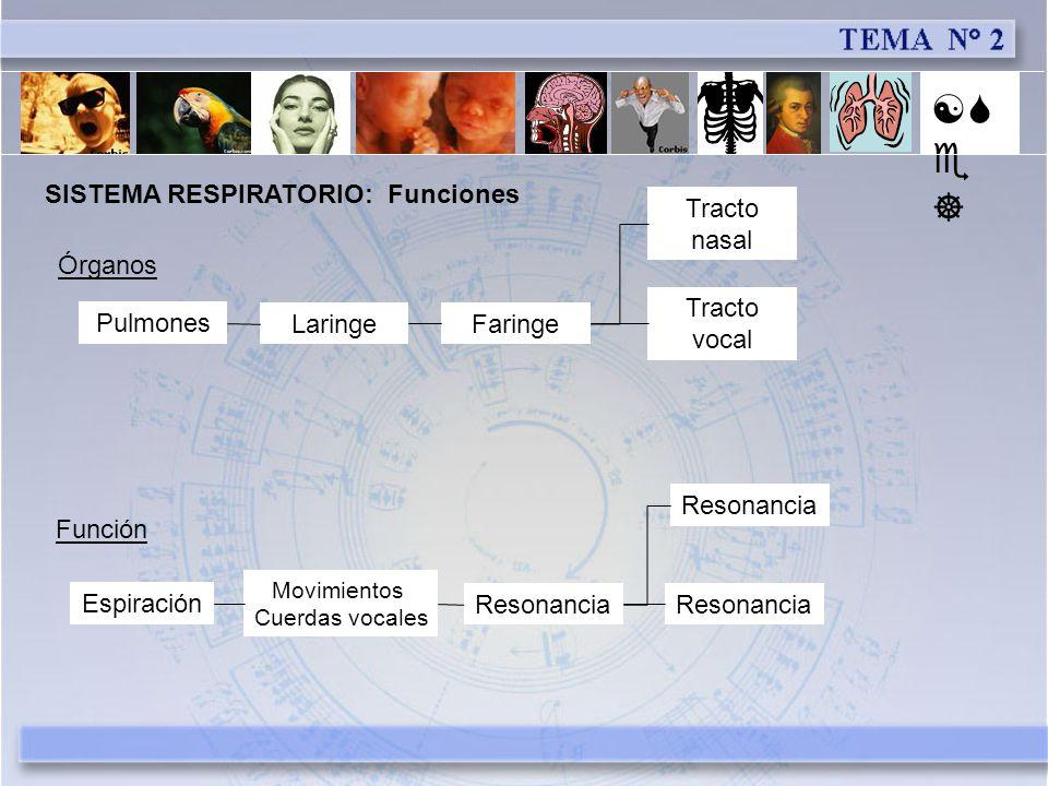 [Se] SISTEMA RESPIRATORIO: Funciones Tracto nasal Órganos Tracto vocal